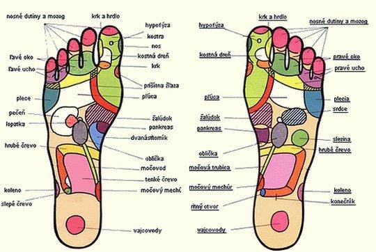 reflexní zóny na ploskách noh